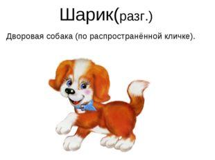 Шарик(разг.) Дворовая собака (по распространённой кличке).