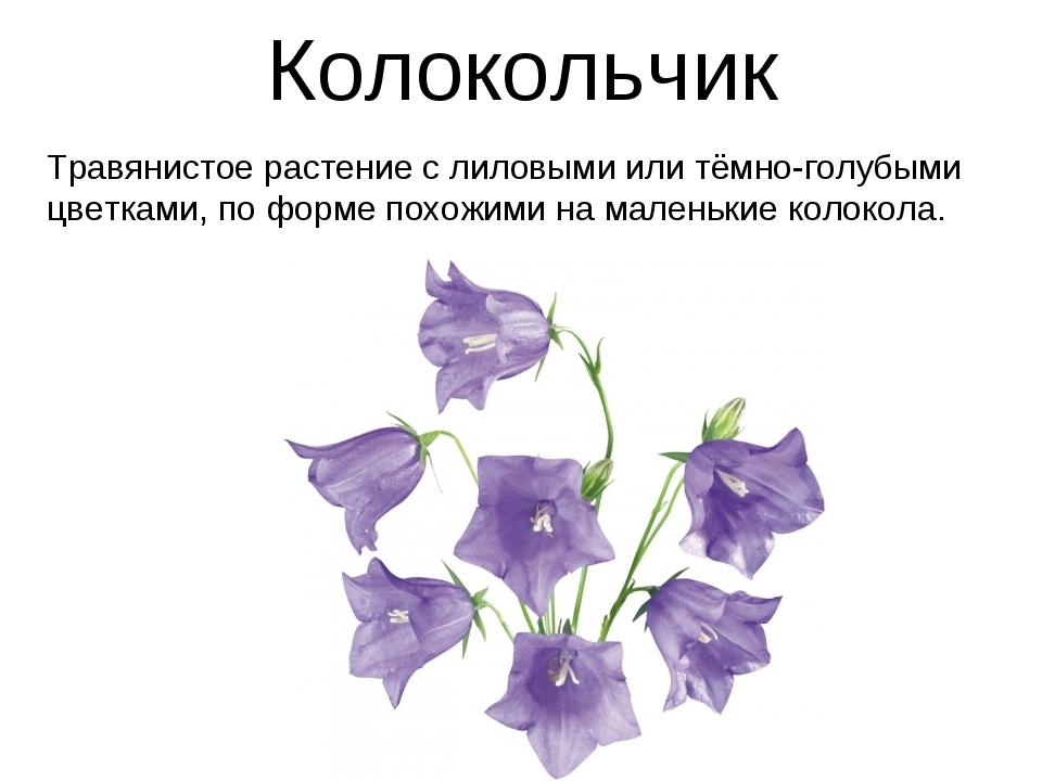 Колокольчик Травянистое растение с лиловыми или тёмно-голубыми цветками, по ф...