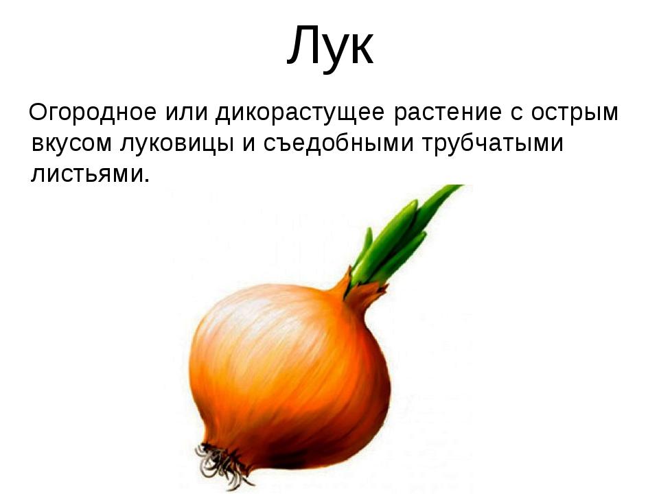 Лук Огородное или дикорастущее растение с острым вкусом луковицы и съедобными...