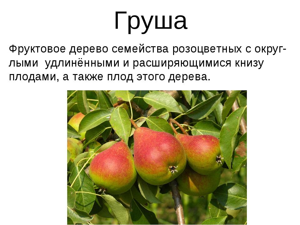 Груша Фруктовое дерево семейства розоцветных с округ-лыми удлинёнными и расши...