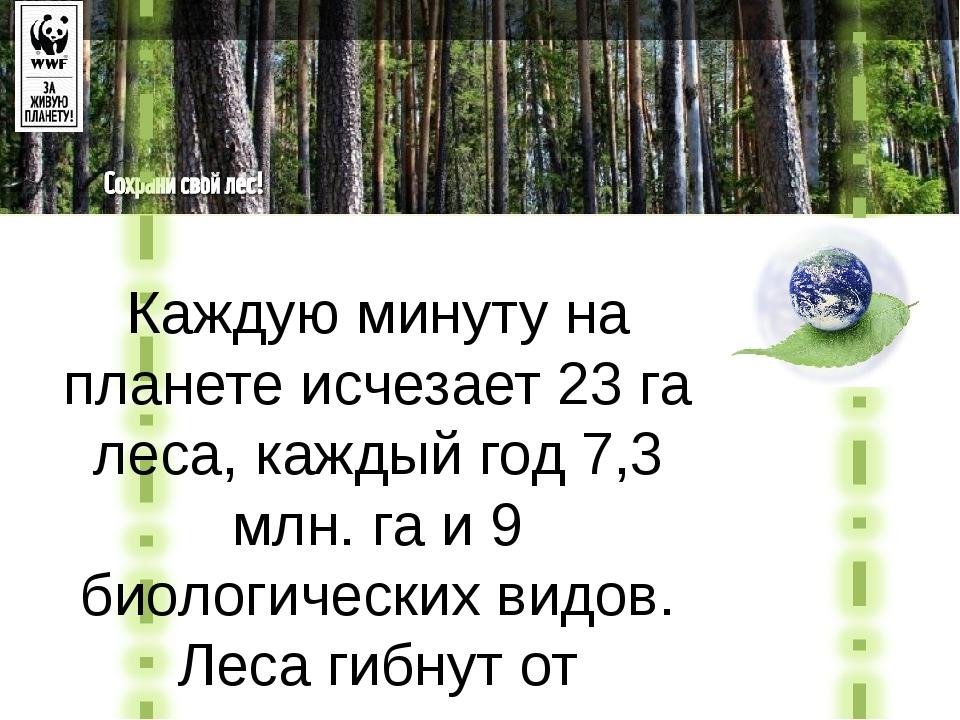 Каждую минуту на планете исчезает 23 га леса, каждый год 7,3 млн. га и 9 биол...