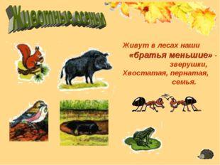 Живут в лесах наши «братья меньшие» - зверушки, Хвостатая, пернатая, семья.