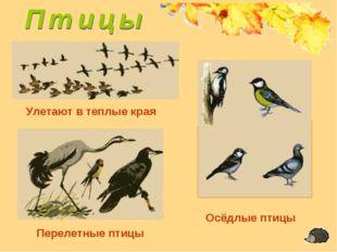 Улетают в теплые края Перелетные птицы Осёдлые птицы