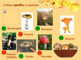 Собери грибы в лукошко Груздь Мухомор Лисички Маслёнок Белый гриб Поганка Лож