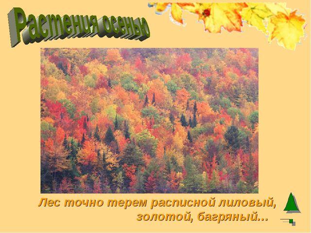 Лес точно терем расписной лиловый, золотой, багряный…