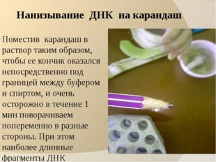 Нанизывание ДНК на карандаш Поместив карандаш в раствор таким образом, чтобы