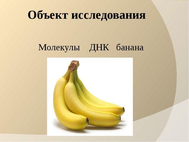 Объект исследования Молекулы ДНК банана