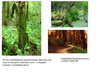 Мхом и лишайниками деревья больше зарастают там, куда не попадают солнечные л