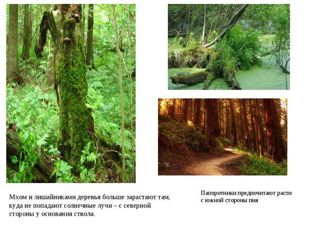 Мхом и лишайниками деревья больше зарастают там, куда не попадают солнечные л...