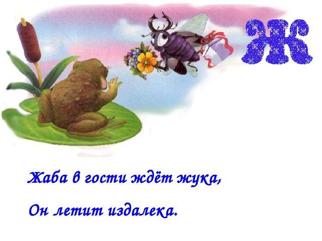 Жаба в гости ждёт жука, Он летит издалека.