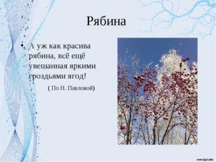 Рябина А уж как красива рябина, всё ещё увешанная яркими гроздьями ягод! ( По