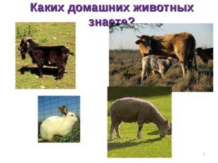 Каких домашних животных знаете? *
