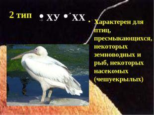 2 тип Характерен для птиц, пресмыкающихся, некоторых земноводных и рыб, некот