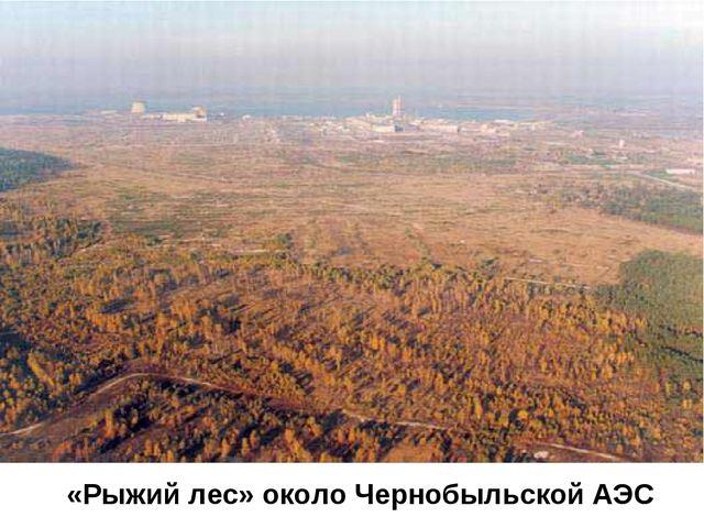 «Рыжий лес» около Чернобыльской АЭС