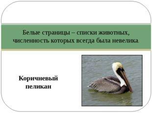 Коричневый пеликан Белые страницы – списки животных, численность которых все
