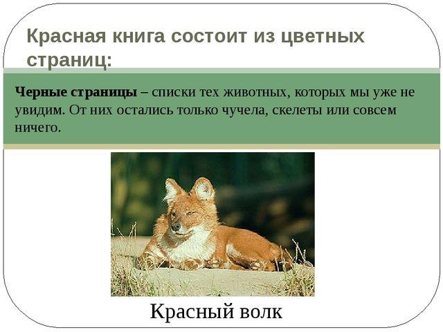 Красная книга состоит из цветных страниц: Красный волк Черные страницы – спис...