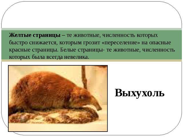 Выхухоль Желтые страницы – те животные, численность которых быстро снижается...