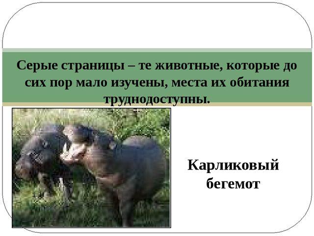 Серые страницы – те животные, которые до сих пор мало изучены, места их обит...
