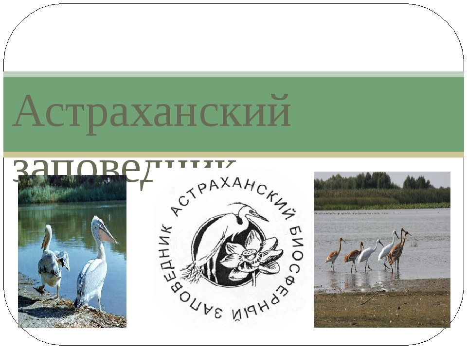 Астраханский заповедник