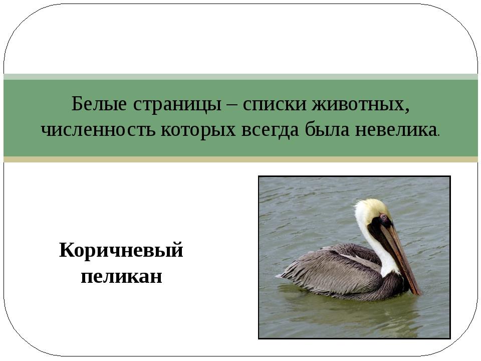 Коричневый пеликан Белые страницы – списки животных, численность которых все...