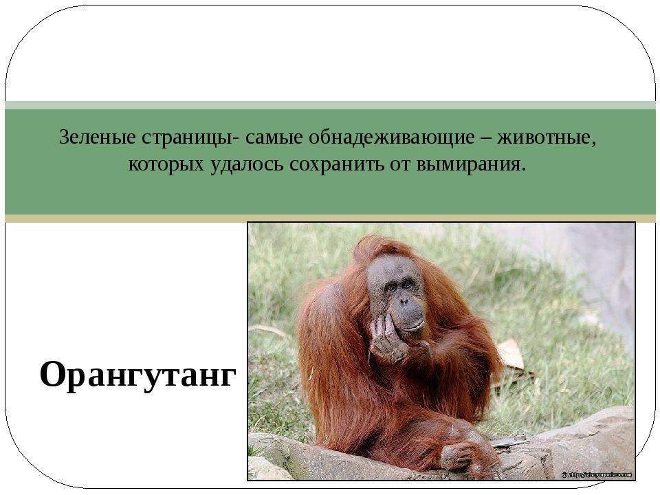 Зеленые страницы- самые обнадеживающие – животные, которых удалось сохранить...