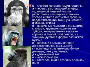 Б - Особенности анатомии гориллы а - череп с выступающей вперед удлиненной ли