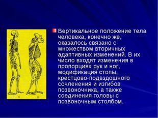 Вертикальное положение тела человека, конечно же, оказалось связано с множест
