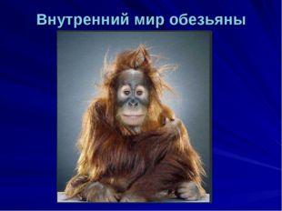 Внутренний мир обезьяны