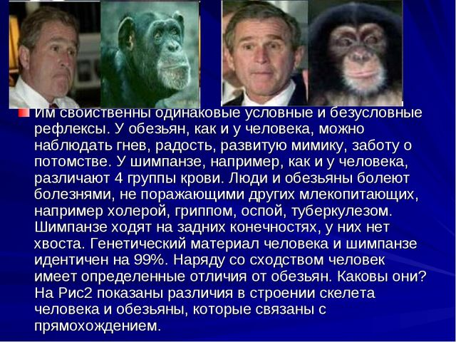 Им свойственны одинаковые условные и безусловные рефлексы. У обезьян, как и у...