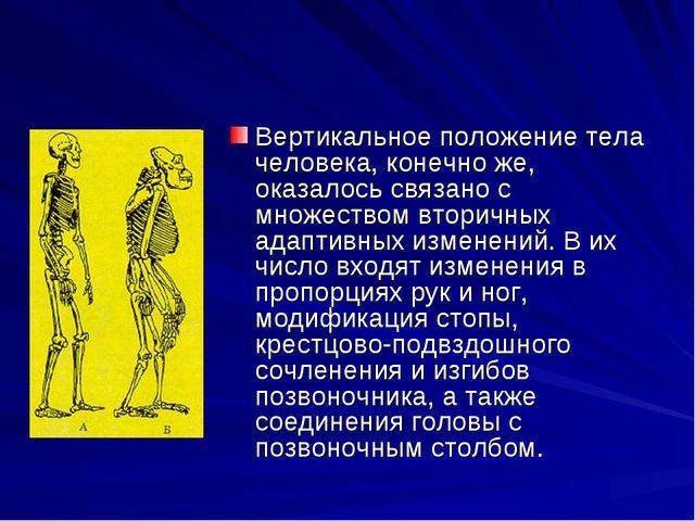Вертикальное положение тела человека, конечно же, оказалось связано с множест...