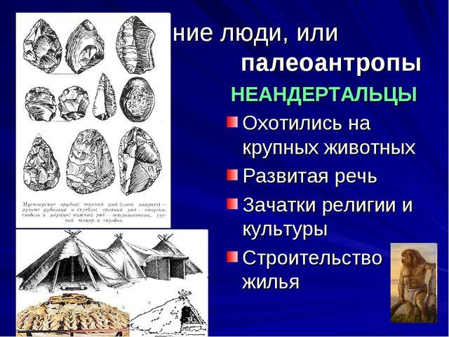 Древние люди, или палеоантропы НЕАНДЕРТАЛЬЦЫ Охотились на крупных животных Ра...