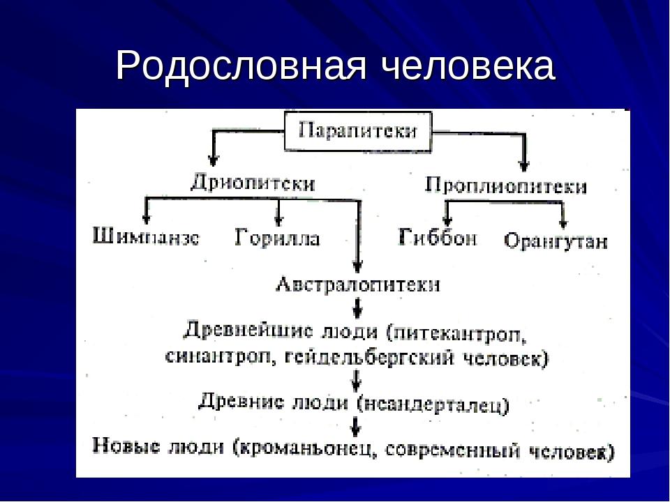 Родословная человека
