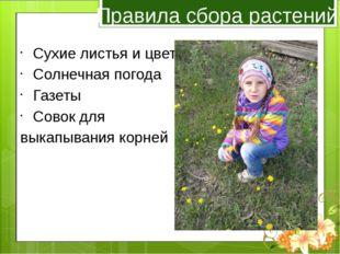 Правила сбора растений Сухие листья и цветы Солнечная погода Газеты Совок для