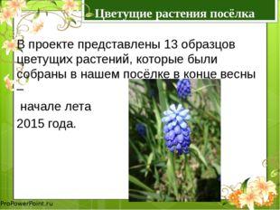Цветущие растения посёлка Козыревск В проекте представлены 13 образцов цветущ