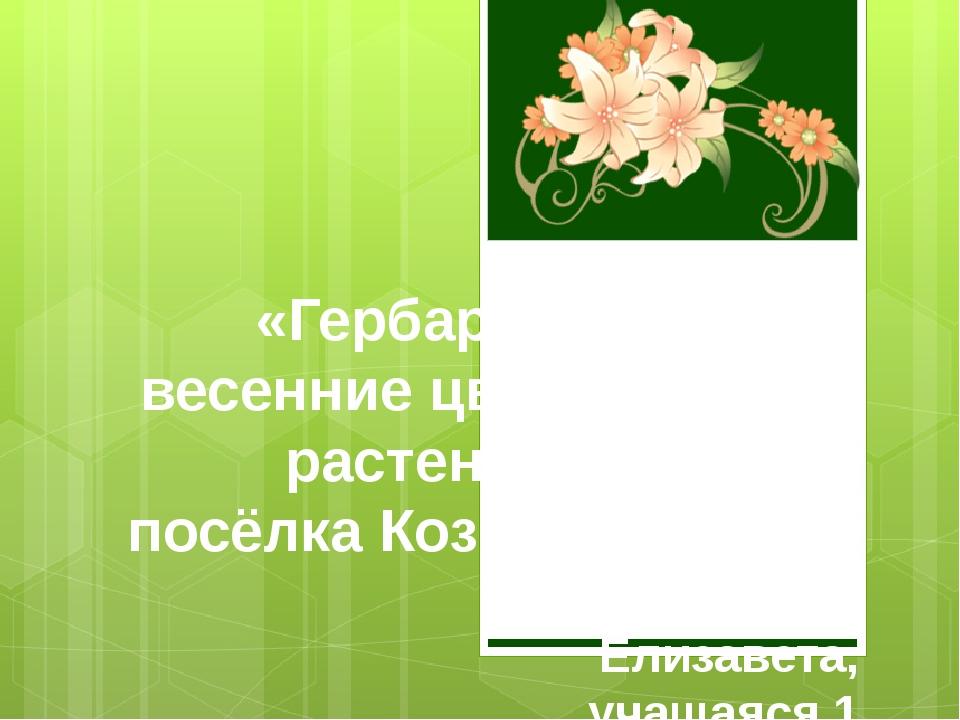 «Гербарий: весенние цветущие растения посёлка Козыревск» Автор: Александрова...