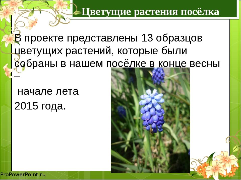 Цветущие растения посёлка Козыревск В проекте представлены 13 образцов цветущ...