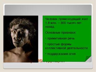 Человек прямоходящий Человек прямоходящий жил 1,8 млн. – 300 тысяч лет назад.