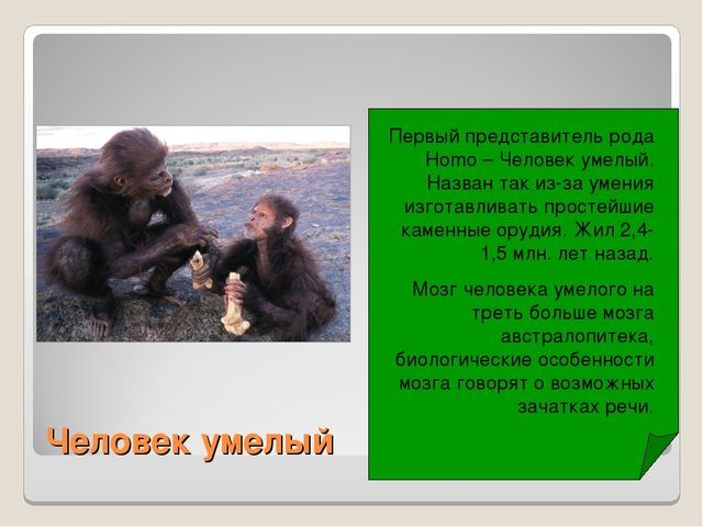 Человек умелый Первый представитель рода Homo – Человек умелый. Назван так из...