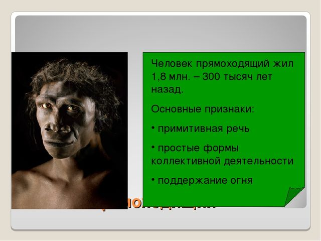 Человек прямоходящий Человек прямоходящий жил 1,8 млн. – 300 тысяч лет назад....