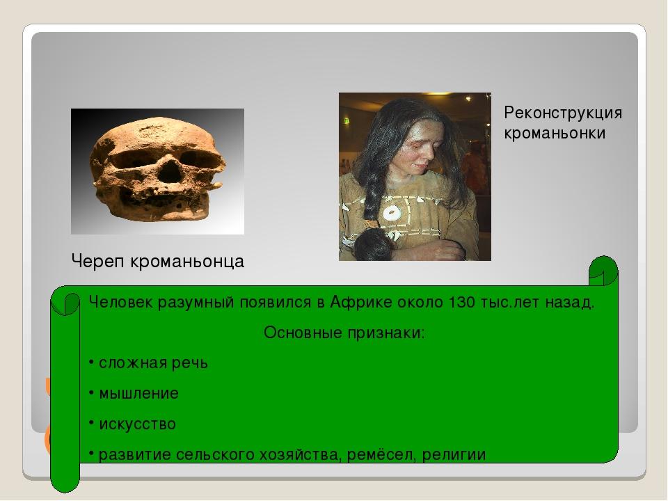 Человек разумный (кроманьонец) Череп кроманьонца Человек разумный появился в...