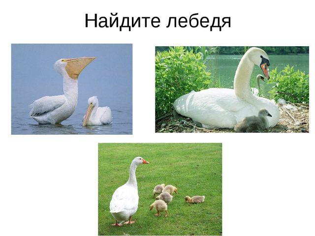 Найдите лебедя