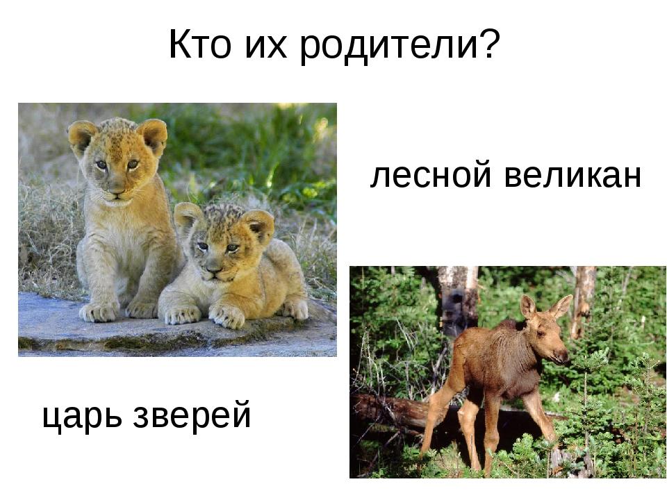 Кто их родители? царь зверей лесной великан