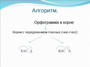 Алгоритм. Орфограмма в корне Корни с чередованием гласных (-кас-/-кос) КАС А