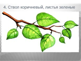 4. Ствол коричневый, листья зеленые