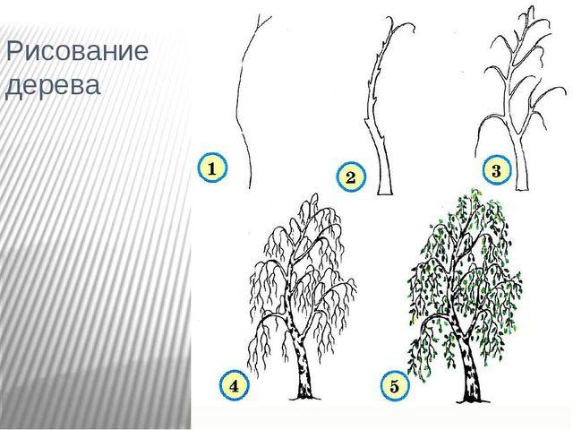 Рисование дерева