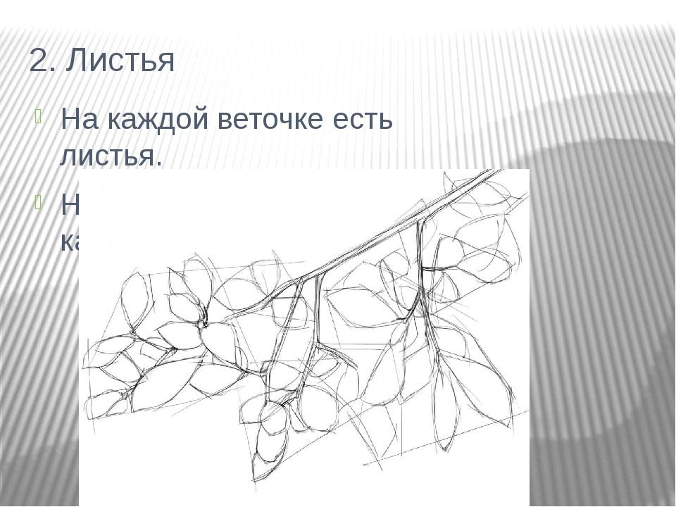 2. Листья На каждой веточке есть листья. Не нажимайте сильно на карандаш.