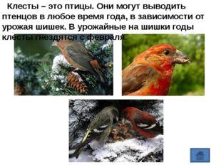 https://yandex.ru/images/search?text=РАЗВИВАЕМ%20РЕЧЬ%20%20Читать%20сказки%20