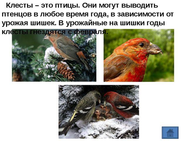 https://yandex.ru/images/search?text=РАЗВИВАЕМ%20РЕЧЬ%20%20Читать%20сказки%20...