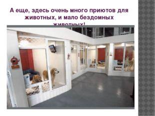 А еще, здесь очень много приютов для животных, и мало бездомных животных!