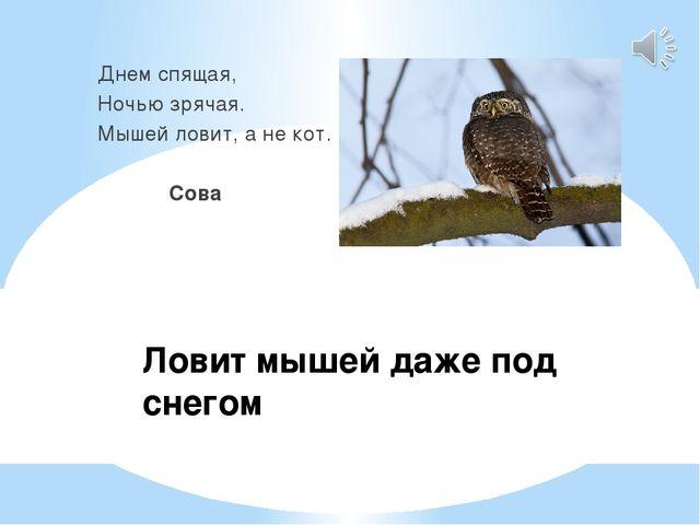 Ловит мышей даже под снегом Днем спящая, Ночью зрячая. Мышей ловит, а не кот....